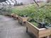 Creative Gardening Project - Raised beds for growing edible plants